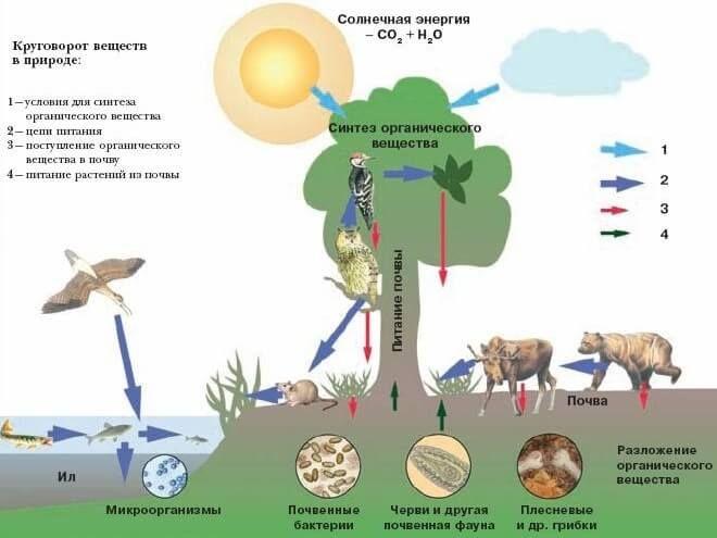 Схема круговорота воды в биосфере фото 847